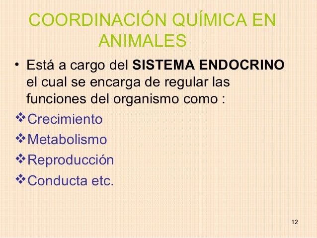 COORDINACIÓN QUÍMICA EN       ANIMALES• Está a cargo del SISTEMA ENDOCRINO  el cual se encarga de regular las  funciones d...