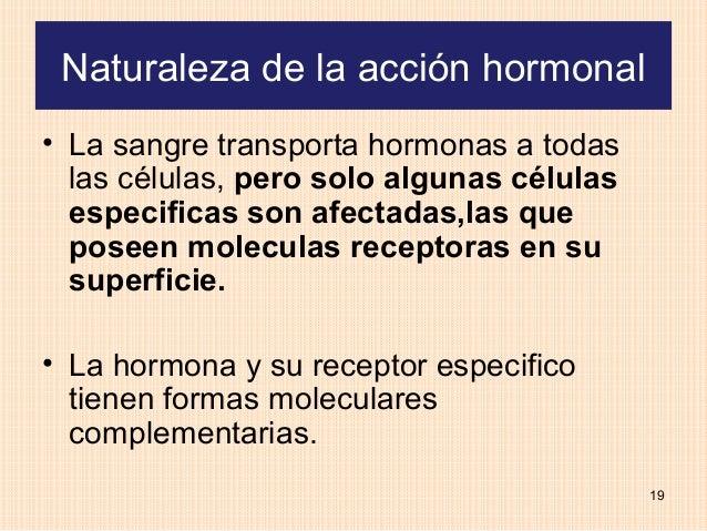 Naturaleza de la acción hormonal• La sangre transporta hormonas a todas  las células, pero solo algunas células  especific...