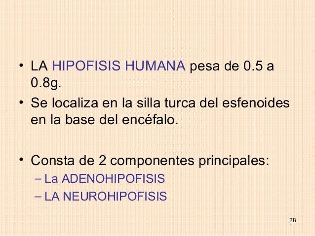 • LA HIPOFISIS HUMANA pesa de 0.5 a  0.8g.• Se localiza en la silla turca del esfenoides  en la base del encéfalo.• Consta...