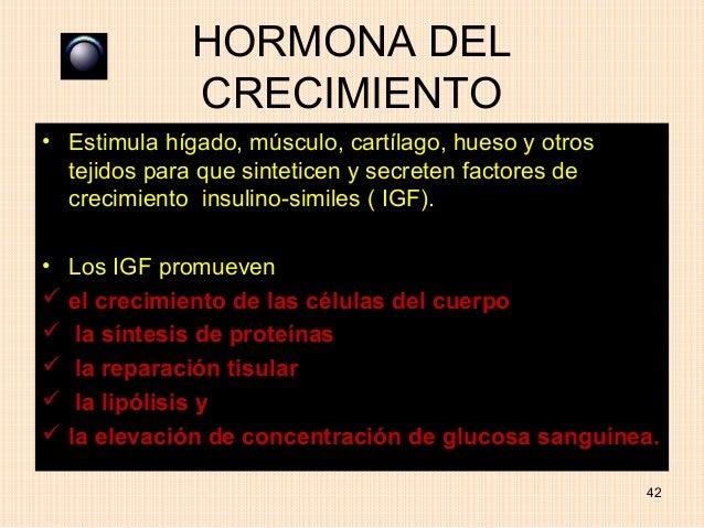 HORMONA DEL              CRECIMIENTO• Estimula hígado, músculo, cartílago, hueso y otros  tejidos para que sinteticen y se...