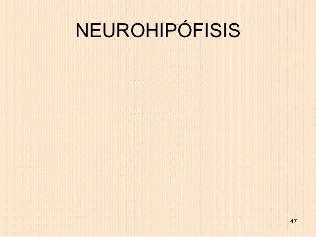 NEUROHIPÓFISIS                 47