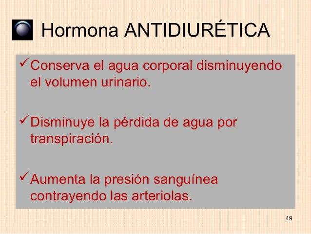 Hormona ANTIDIURÉTICAConserva el agua corporal disminuyendo el volumen urinario.Disminuye la pérdida de agua por transpi...