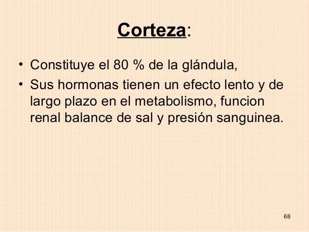 Corteza:• Constituye el 80 % de la glándula,• Sus hormonas tienen un efecto lento y de  largo plazo en el metabolismo, fun...