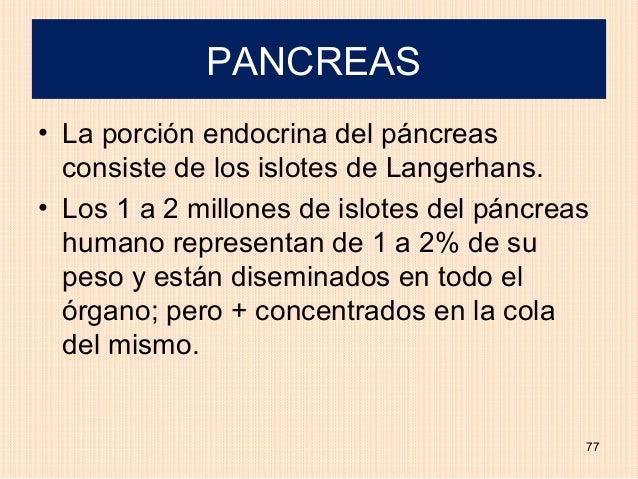 PANCREAS• La porción endocrina del páncreas  consiste de los islotes de Langerhans.• Los 1 a 2 millones de islotes del pán...