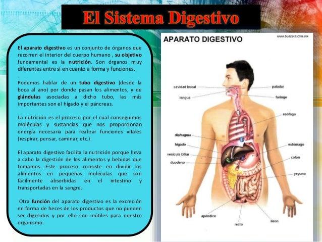 Sistema respiratorio, circulatorio y digestivo