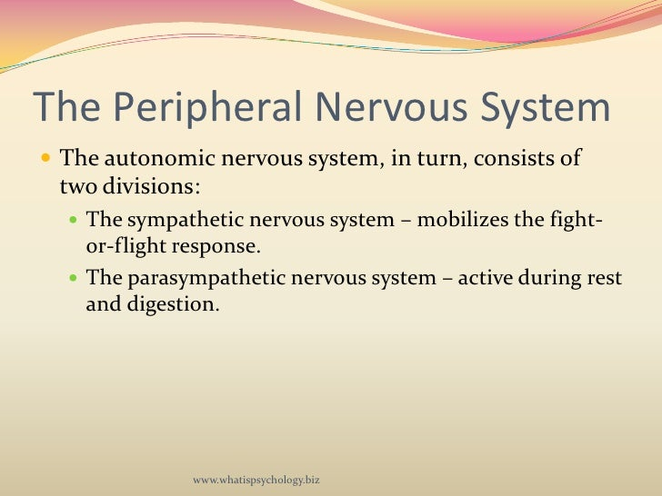 a description of the autonomic nervous system which is made up of two divisions Description the spinal cord begins  the autonomic nervous system has two  it can be said that the motor pathways of the autonomic nervous system are made up.