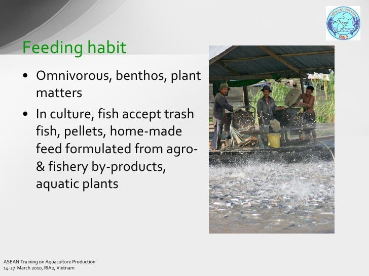 grouper culture techniques Fish farming in recirculating aquaculture systems (ras)  pollution has promoted the culture of farm-fresh that are grown in contaminant-free.
