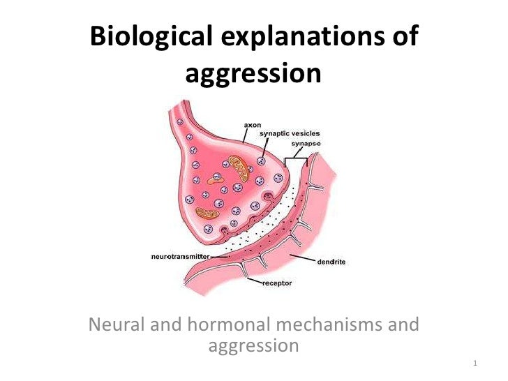 Biological explanations of aggression<br />Neural and hormonal mechanisms and aggression<br />1<br />