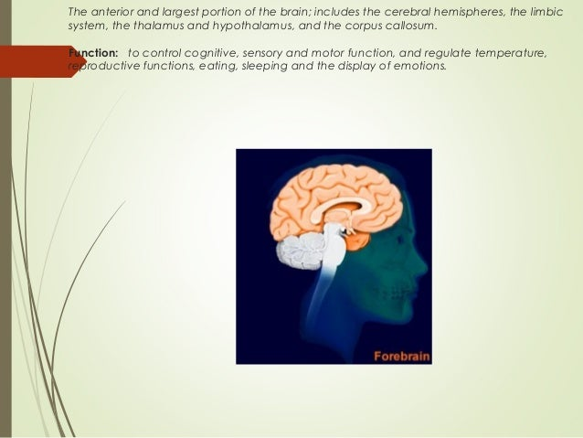 biological foundations of psychology The major in psychology psychology is a discipline that embraces both biological and social sciences it is a science concerned with establishing principles and laws regarding the ways in which people think and behave through the scientific study of human behavior.