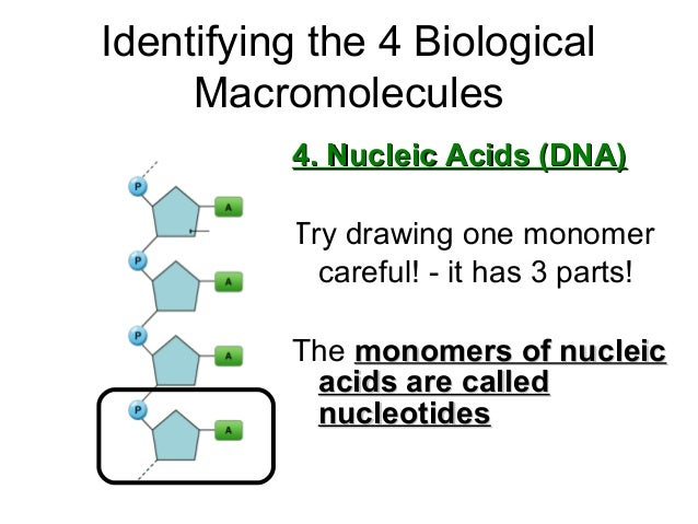 Biological macromolecules carbohydrates, lipids, proteins, nucleic ac…