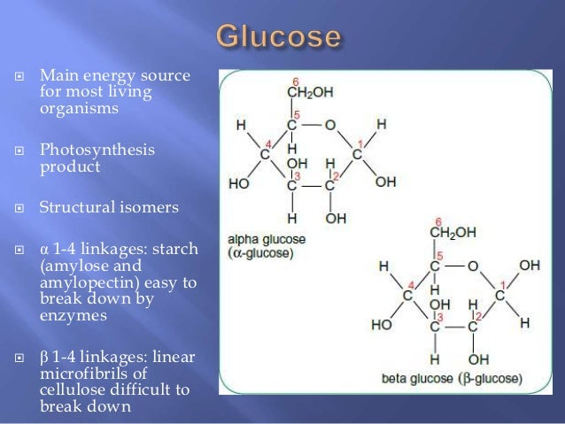 Biological Molecules  Carbohydrates And Lipids  Water And Proteins Re U2026