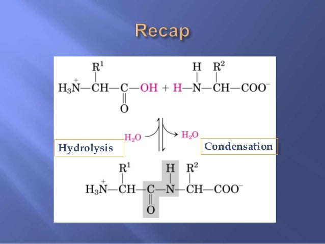 biological importance of water and lipids After completing this lesson, you will be able to explain why water is so important, and describe the five main functions of water in the human.