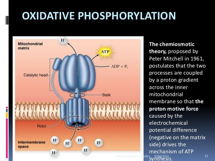 biological oxidation and oxidative phosphorylation
