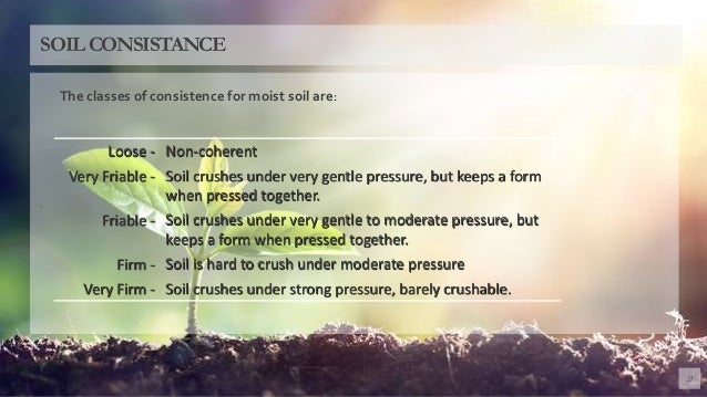 . 21 SOILCONSISTANCE Loose - Non-coherent Very Friable - Soil crushes under very gentle pressure, but keeps a form when pr...
