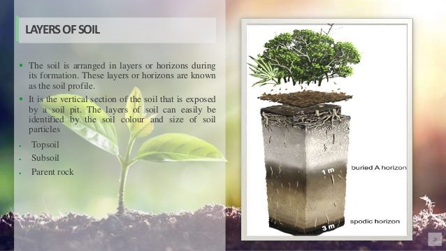26  The soil is arranged in layers or horizons during its formation. These layers or horizons are known as the soil profi...