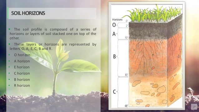 27  The soil profile is composed of a series of horizons or layers of soil stacked one on top of the other.  These layer...