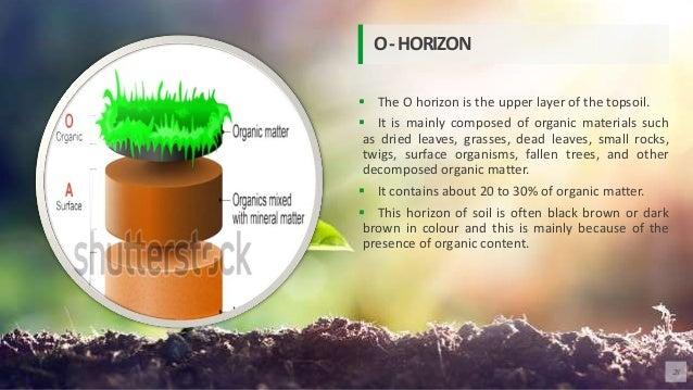  The O horizon is the upper layer of the topsoil.  It is mainly composed of organic materials such as dried leaves, gras...