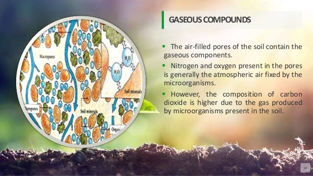 The air-filled pores of the soil contain the gaseous components.  Nitrogen and oxygen present in the pores is generally...