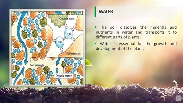  The soil dissolves the minerals and nutrients in water and transports it to different parts of plants.  Water is essent...