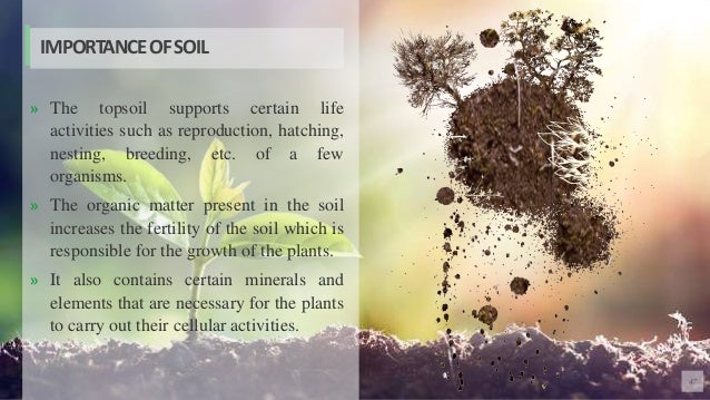 47 » The topsoil supports certain life activities such as reproduction, hatching, nesting, breeding, etc. of a few organis...