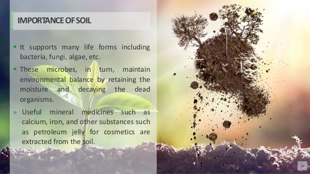 48  It supports many life forms including bacteria, fungi, algae, etc.  These microbes, in turn, maintain environmental ...
