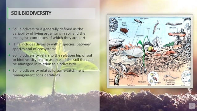 53  Soil biodiversity is generally defined as the variability of living organisms in soil and the ecological complexes of...