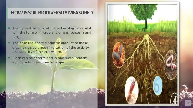 55  The highest amount of the soil ecological capital is in the form of microbial biomass (bacteria and fungi).  The abs...