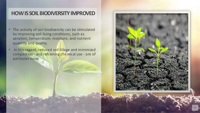 56  The activity of soil biodiversity can be stimulated by improving soil living conditions, such as aeration, temperatur...