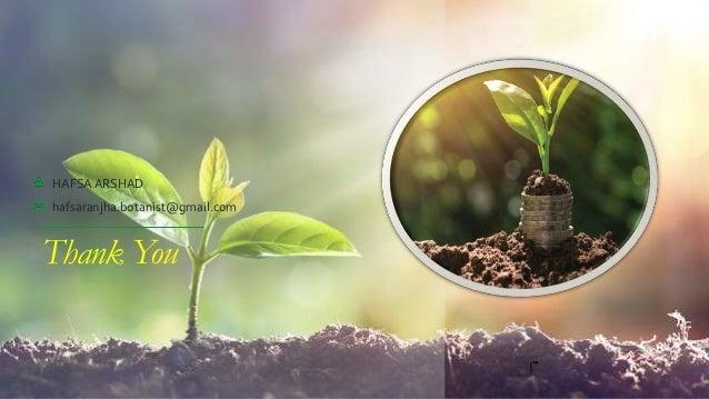 Thank You HAFSA ARSHAD hafsaranjha.botanist@gmail.com