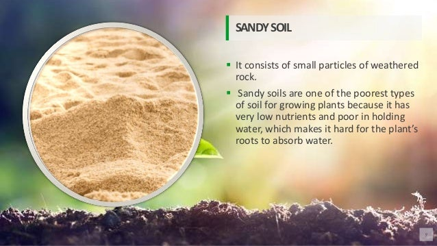  It consists of small particles of weathered rock.  Sandy soils are one of the poorest types of soil for growing plants ...