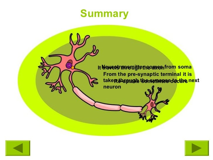 Neurontin 300 mg cap