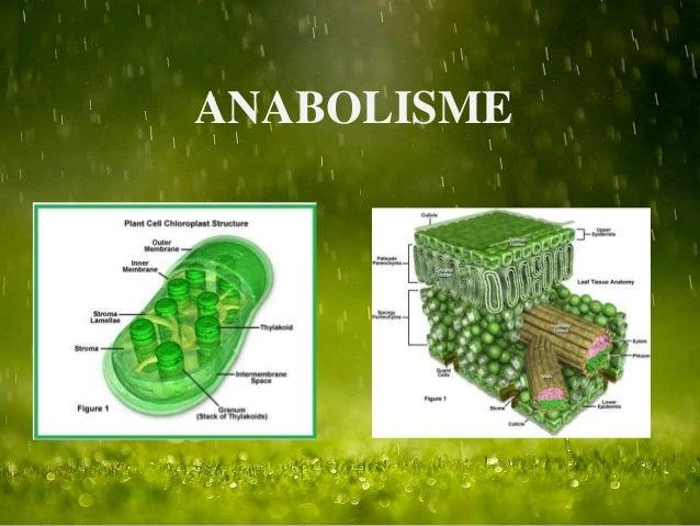 Perbedaan Metabolisme katabolisme anabolisme
