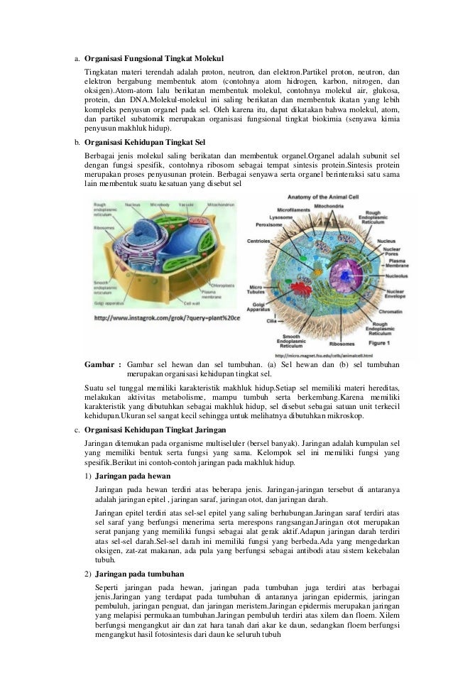 RPP SMA Biologi Kelas X Slide 3
