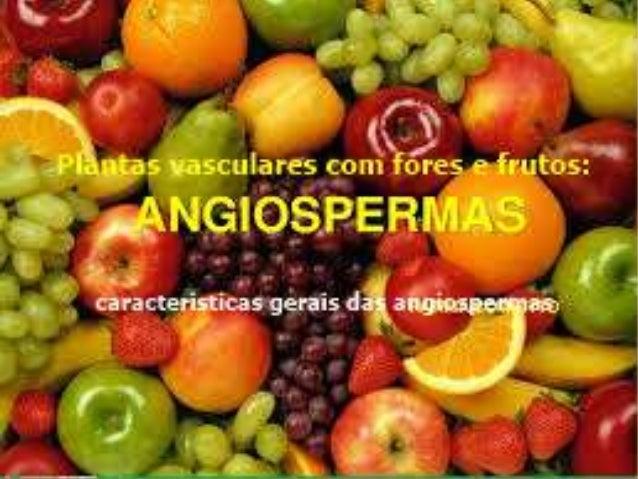 ANGIOSPERMAS Atualmente são conhecidas cerca de 350 mil espécies de plantas – desse total, mais de 250 mil são angiosperma...