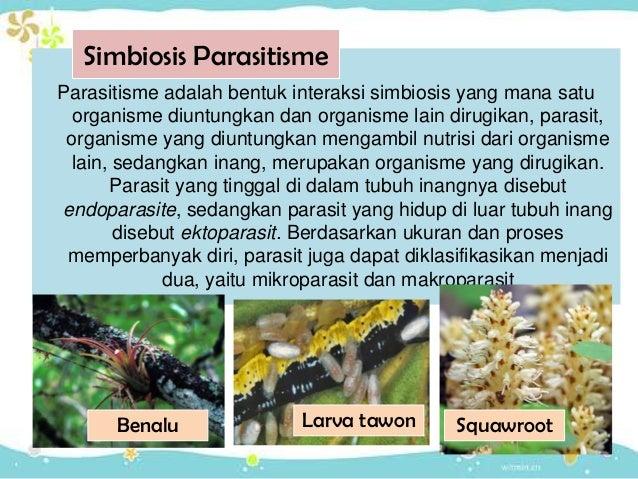 Interaksi Organisme_simbiosis