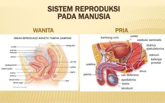 reproduksi wanita dan pria