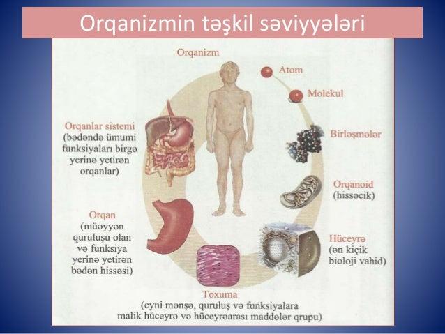 Biologiya  hüceyrə Slide 3