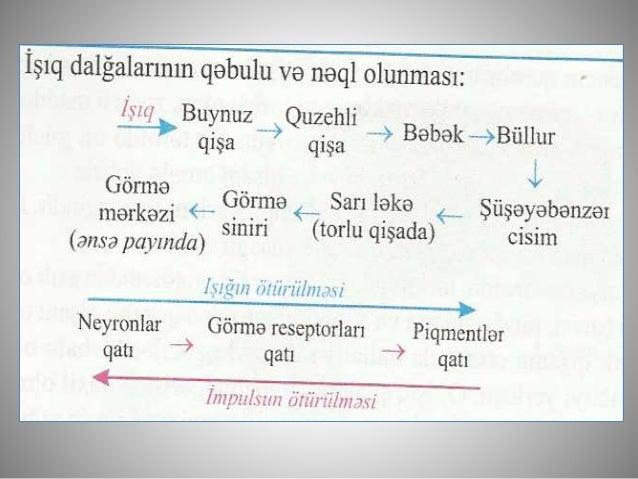 Biologiya 9 analizatorlar   göz