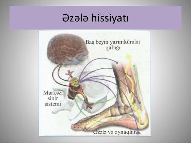 Biologiya 9 eşi̇tmə
