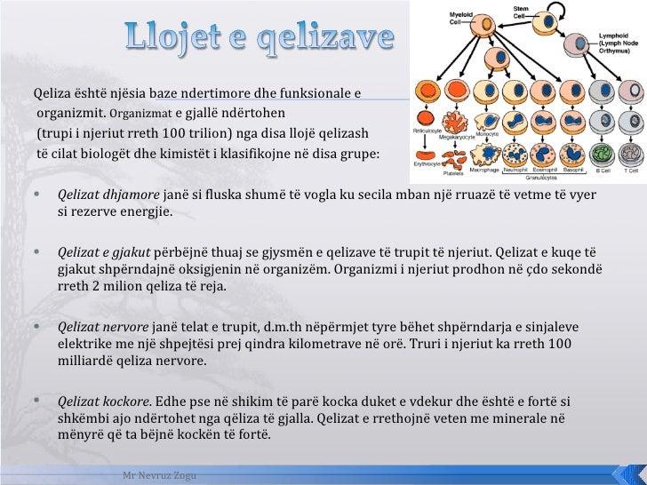 <ul><li>Qeliza është njësia baze ndertimore dhe funksionale e </li></ul><ul><li>organizmit.  Organizmat  e gjallë ndërtohe...