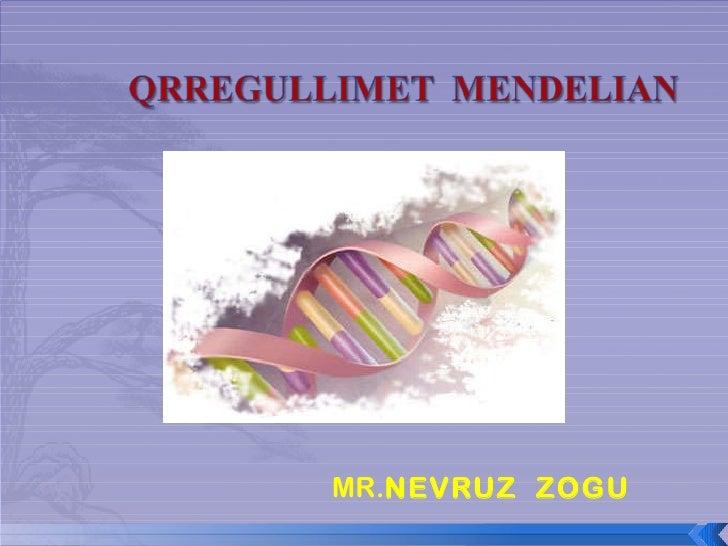 MR. NEVRUZ  ZOGU