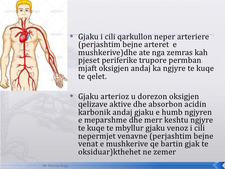 <ul><li>Gjaku i cili qarkullon neper arteriere (perjashtim bejne arteret  e mushkerive)dhe ate nga zemras kah pjeset perif...