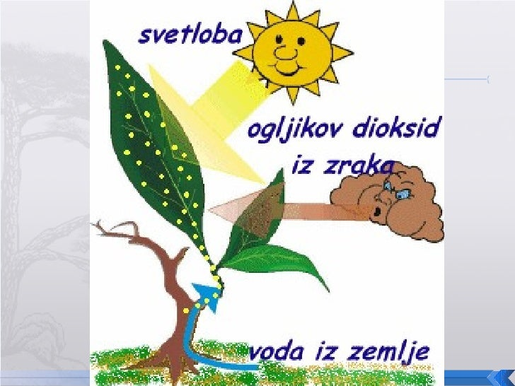 Mr Nevruz Zogu