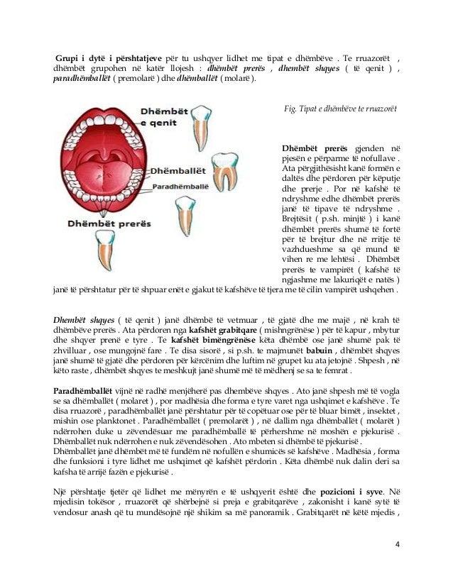 4 Grupi i dytë i përshtatjeve për tu ushqyer lidhet me tipat e dhëmbëve . Te rruazorët , dhëmbët grupohen në katër llojesh...