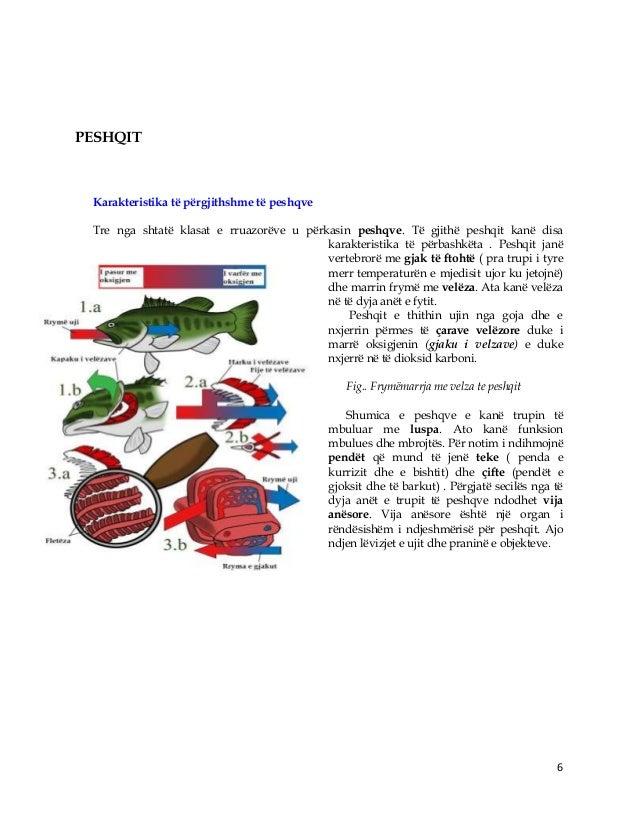 6 PESHQIT Karakteristika të përgjithshme të peshqve Tre nga shtatë klasat e rruazorëve u përkasin peshqve. Të gjithë peshq...