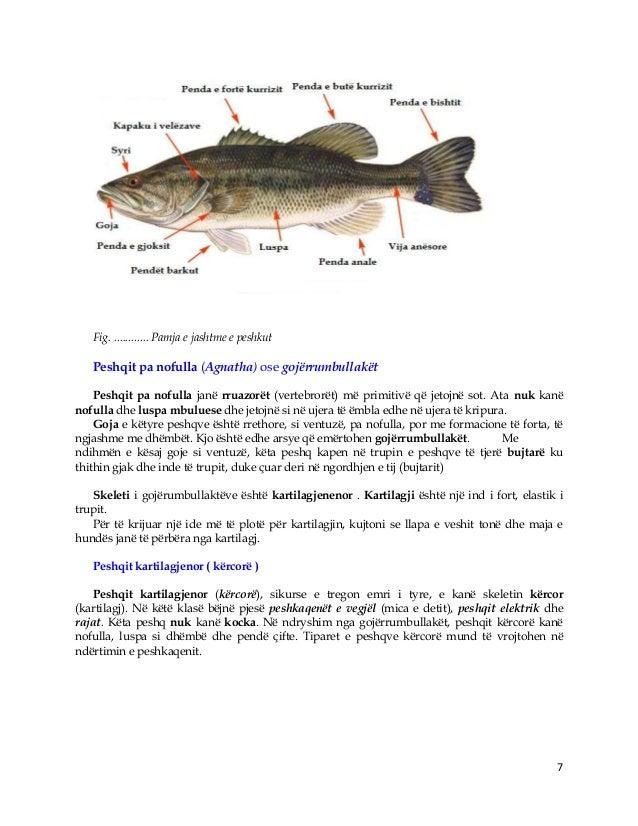 7 Fig. ............ Pamja e jashtme e peshkut Peshqit pa nofulla (Agnatha) ose gojërrumbullakët Peshqit pa nofulla janë rr...