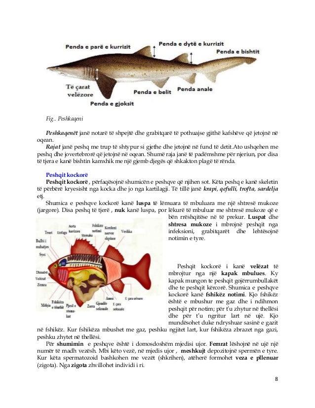8 Fig.. Peshkaqeni Peshkaqenët janë notarë të shpejtë dhe grabitqarë të pothuajse gjithë kafshëve që jetojnë në oqean. Raj...