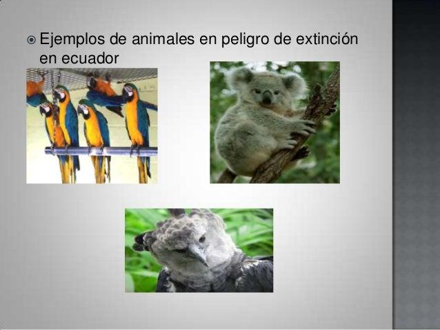 Biologuia
