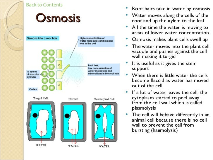 Osmosis diagram gcse