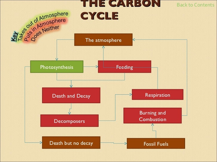 cycles in biology essay plan Carbon cycle essay - no more fails cycle concept of a life cycle measuring time: bramer biology class content on expository paragraph essay in my 2015.